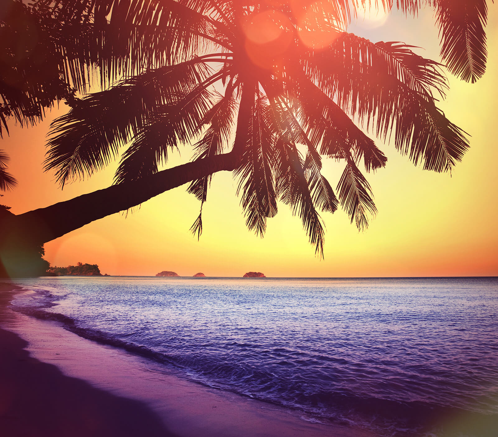 bright tropical beach feature background