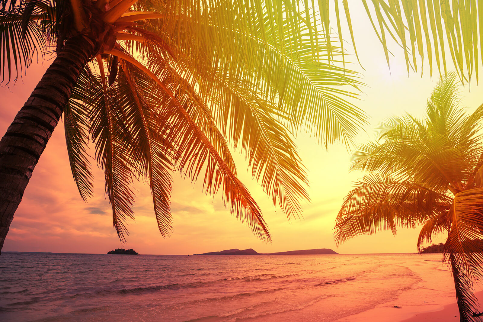 tropical beach feature background